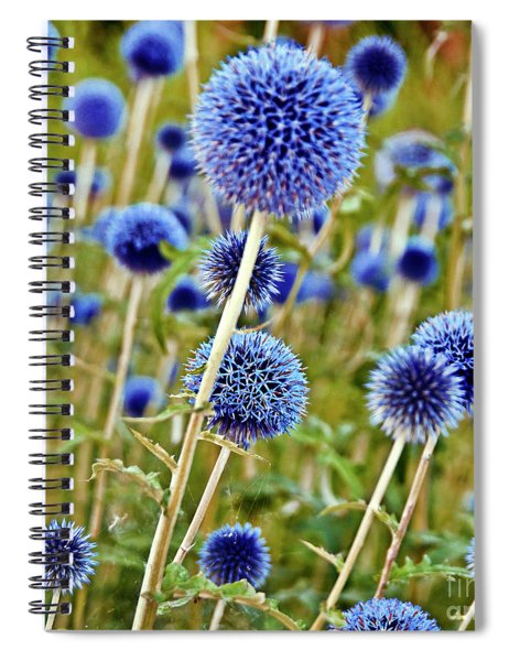 Blue Wild Thistle Spiral Notebook