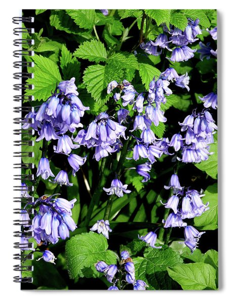 Bluebells Hiding Their Beauty In A Hedgerow Spiral Notebook