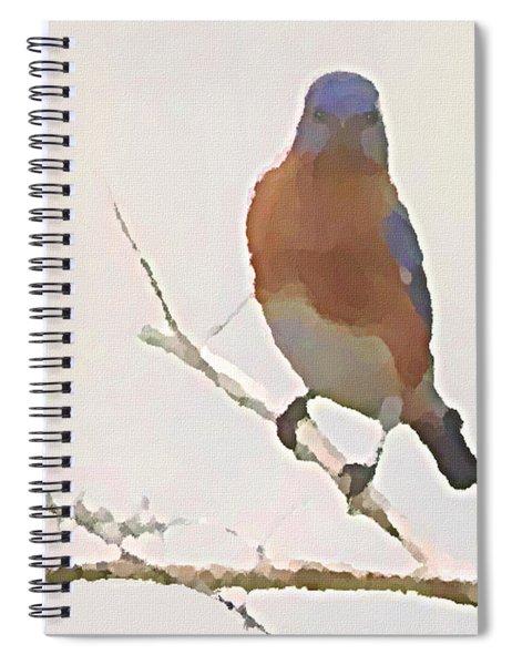 Bluebird Stare  Spiral Notebook