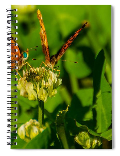 Bluehead Butterfly Spiral Notebook
