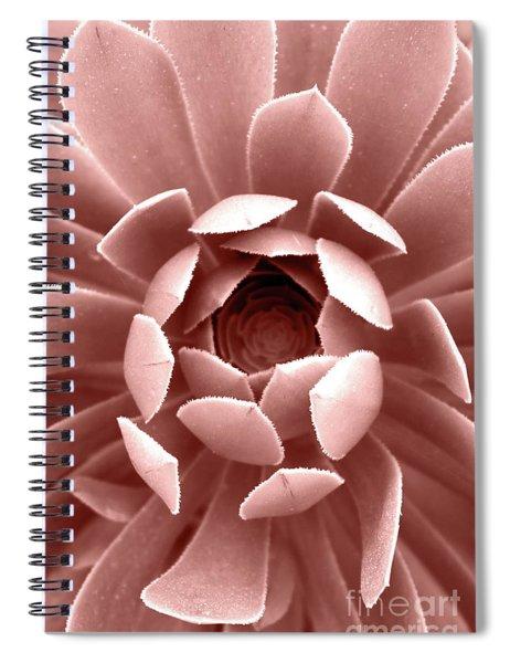Blush Pink Succulent Plant, Cactus Close Up Spiral Notebook