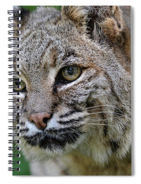Bobcat In The Trees Spiral Notebook