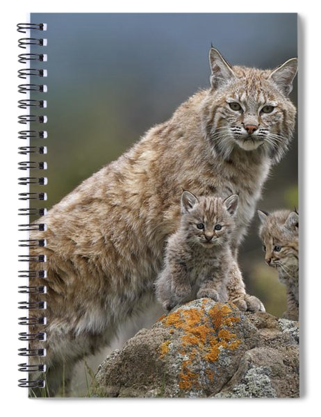 Bobcat Mother And Kittens North America Spiral Notebook