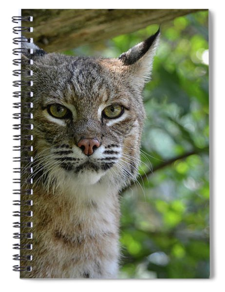 Bobcat Staring Contest Spiral Notebook