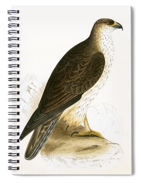 Bonelli's Eagle Spiral Notebook