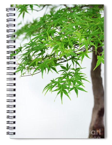 Bonsai Acer Tree Spiral Notebook