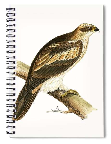 Booted Eagle Spiral Notebook