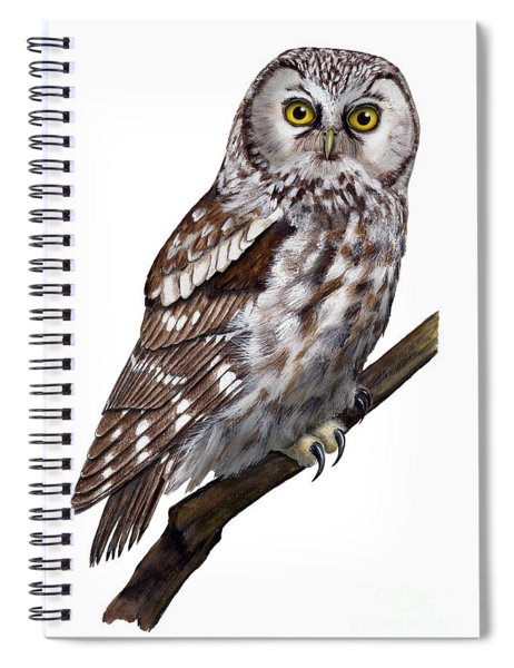 Boreal Owl Tengmalm's Owl Aegolius Funereus - Nyctale De Tengmalm - Paerluggla - Nationalpark Eifel Spiral Notebook