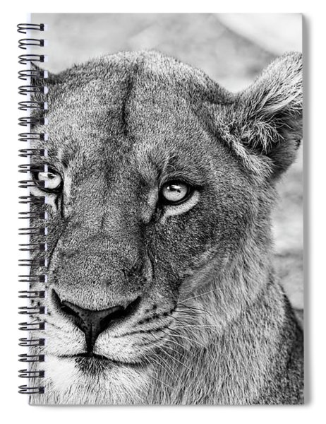 Botswana  Lioness In Black And White Spiral Notebook