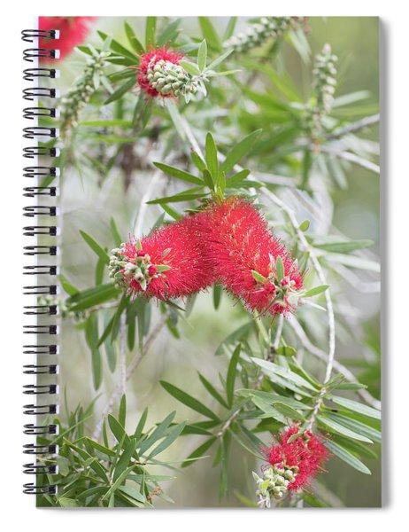 Bottlebrush Spiral Notebook