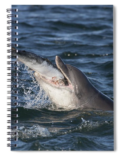 Bottlenose Dolphin Eating A Salmon - Scotland #5 Spiral Notebook