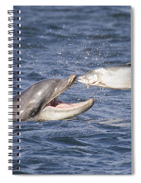Bottlenose Dolphin Eating Salmon - Scotland  #36 Spiral Notebook