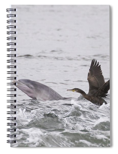 Baby Bottlenose Dolphin - Scotland #10 Spiral Notebook