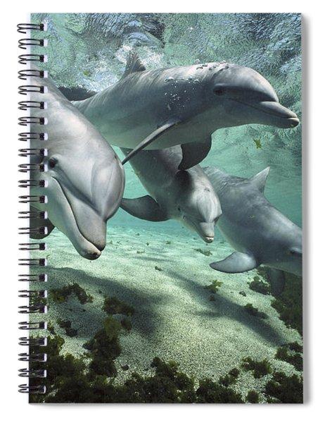 Four Bottlenose Dolphins Hawaii Spiral Notebook