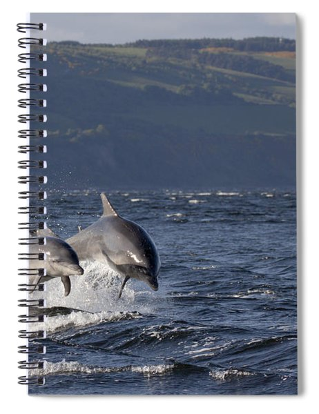 Bottlenose Dolphins Leaping - Scotland  #37 Spiral Notebook