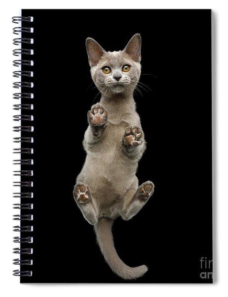 Bottom View Of Kitten Spiral Notebook