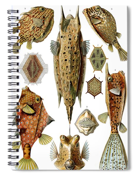 Box Fishes Spiral Notebook