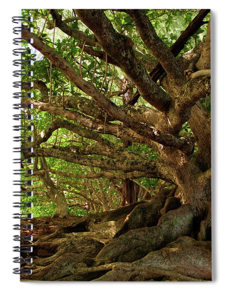 Branches And Roots Spiral Notebook