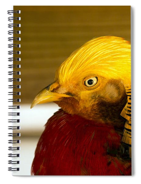 Bright Bird Spiral Notebook