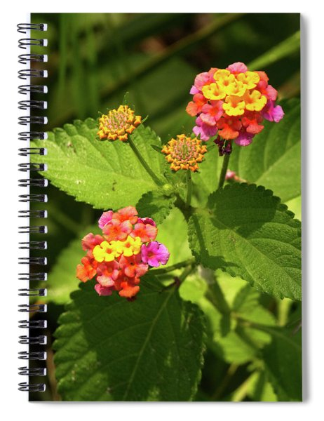 Bright Cluster Of Lantana Flowers Spiral Notebook