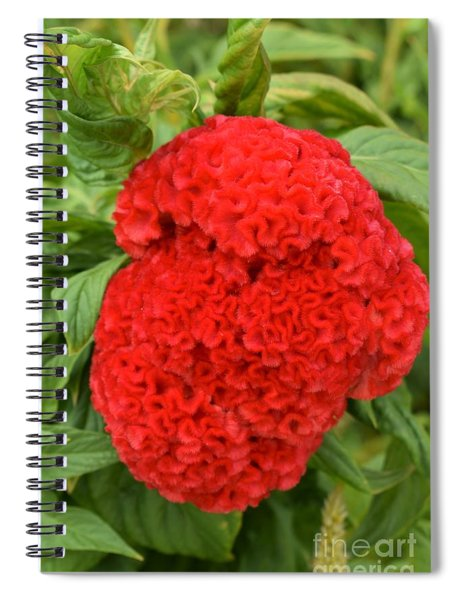 Bright Red Cockscomb Spiral Notebook