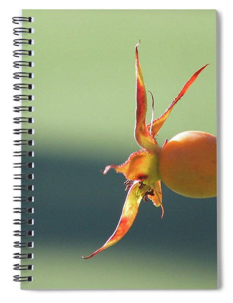 Brilliant Seed Pod Spiral Notebook