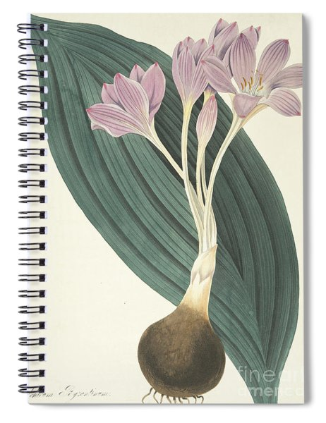 Broad-leaved Meadow Saffron Spiral Notebook