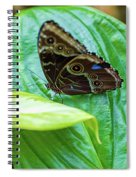 Brown And Blue Butterfly Spiral Notebook
