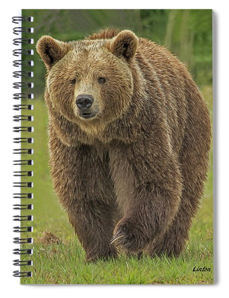 Brown Bear 1 Spiral Notebook