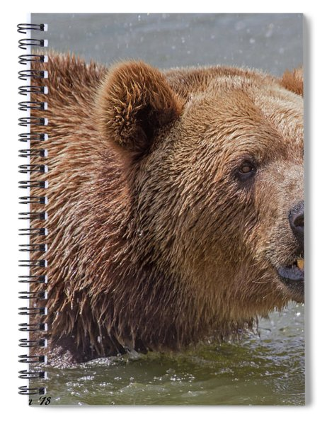 Brown Bear 10 Spiral Notebook