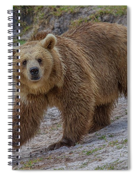 Brown Bear 3 Spiral Notebook