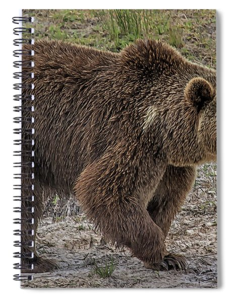 Brown Bear 6 Spiral Notebook