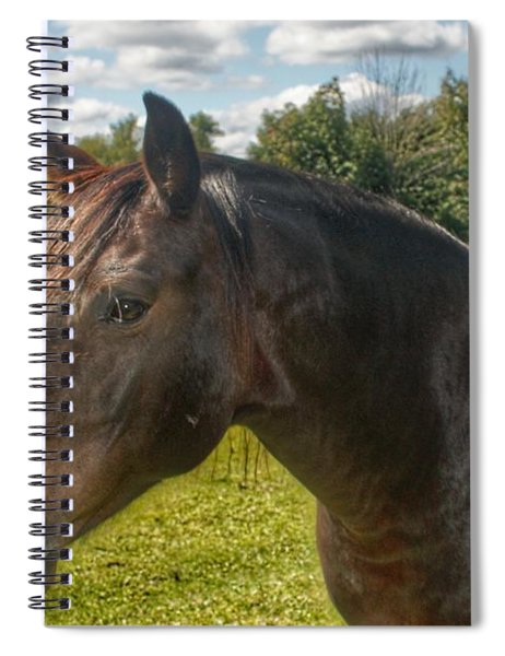 1001 - Brown Beauty I  Spiral Notebook