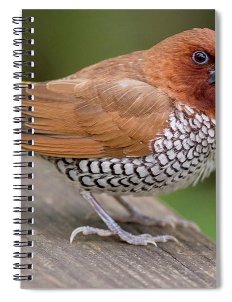 Brown Bird Spiral Notebook