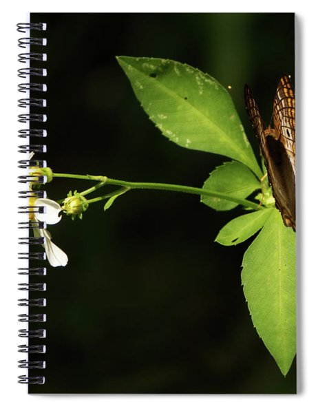 Brown Butterfly On Leaves Spiral Notebook
