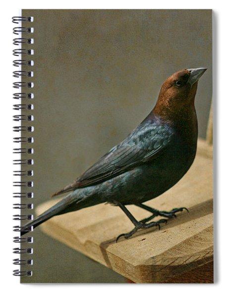 Brown Headed Cowbird 1 Spiral Notebook