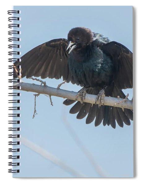 Brown-headed Cowbird 4194-040317-1cr Spiral Notebook