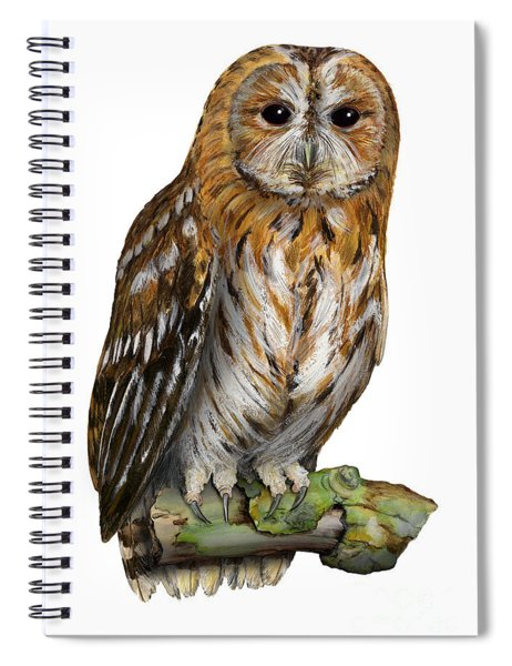 Brown Owl Or Eurasian Tawny Owl  Strix Aluco - Chouette Hulotte - Carabo Comun -  Nationalpark Eifel Spiral Notebook