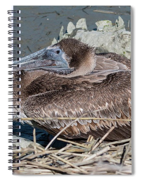 Brown Pelican 3 March 2018 Spiral Notebook