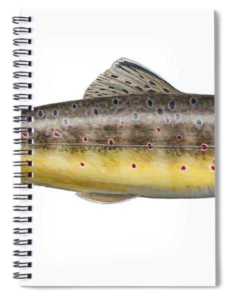 Brown Trout - Autochthonous - Indigenous - Salmo Trutta Morpha Fario - Salmo Trutta Fario Spiral Notebook