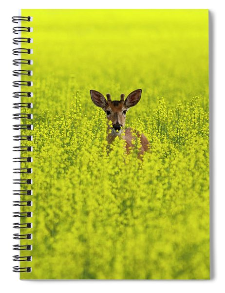 Buck In Canola Spiral Notebook