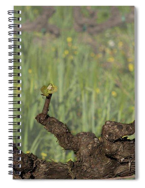 Budbreak In Carneros Spiral Notebook