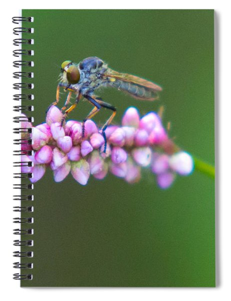 Bug Eyed Spiral Notebook
