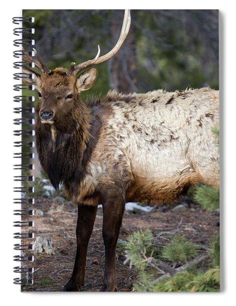 Bull Elk In The Rockies Spiral Notebook