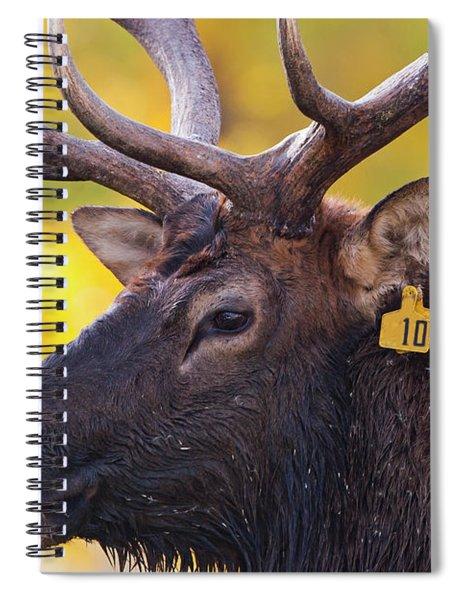 Bull Elk Number 10 Spiral Notebook