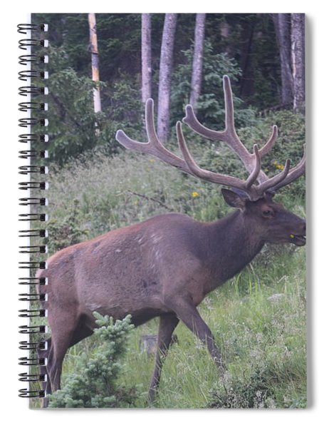 Bull Elk Rocky Mountain Np Co Spiral Notebook