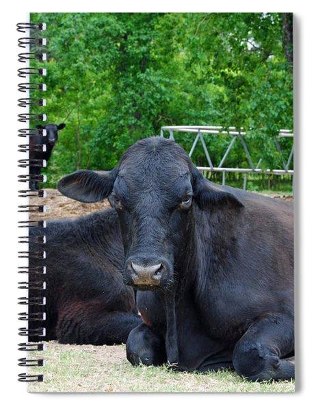 Bull Relaxing Spiral Notebook