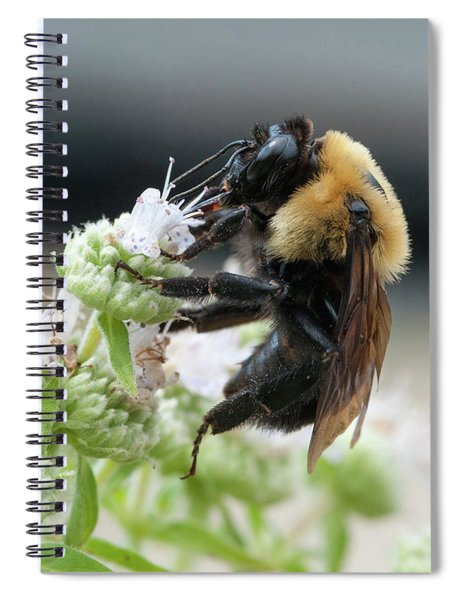 Bumble Bee On Downy Wild Mint Spiral Notebook
