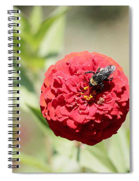 Bumble Bee On Zinnia Spiral Notebook