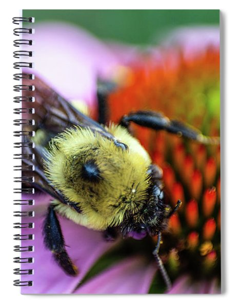 Bumble On A Cone Spiral Notebook